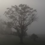 021-A Foggy Fall in Vermont