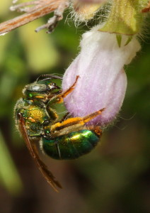 A Pretty Bee Richard Dunaway (29 Points)