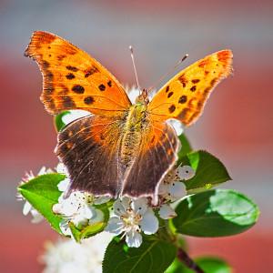 Butterfly Bloom Glen Kerr (23 Points)