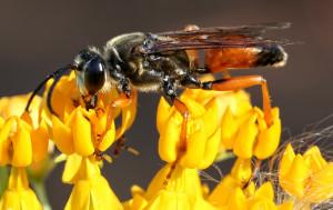 Wasp Having Breakfast Judie Small (29 Points)