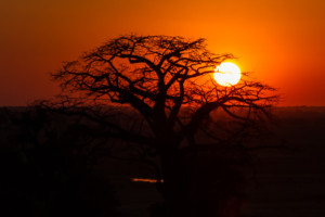 Sundowner Sunset