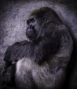 323-Deep In Thought (BEST OF MERIT)