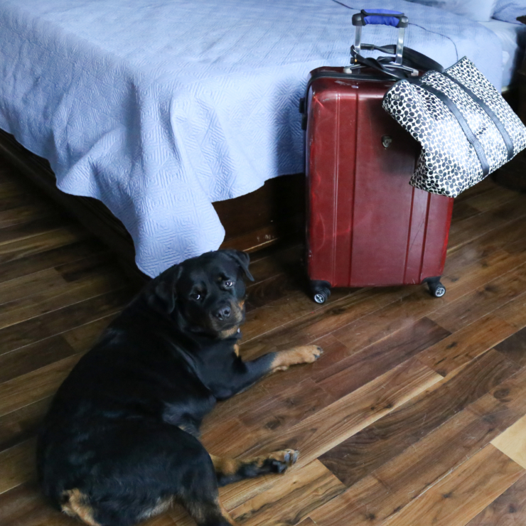 Prepping Your Pets For Vacation