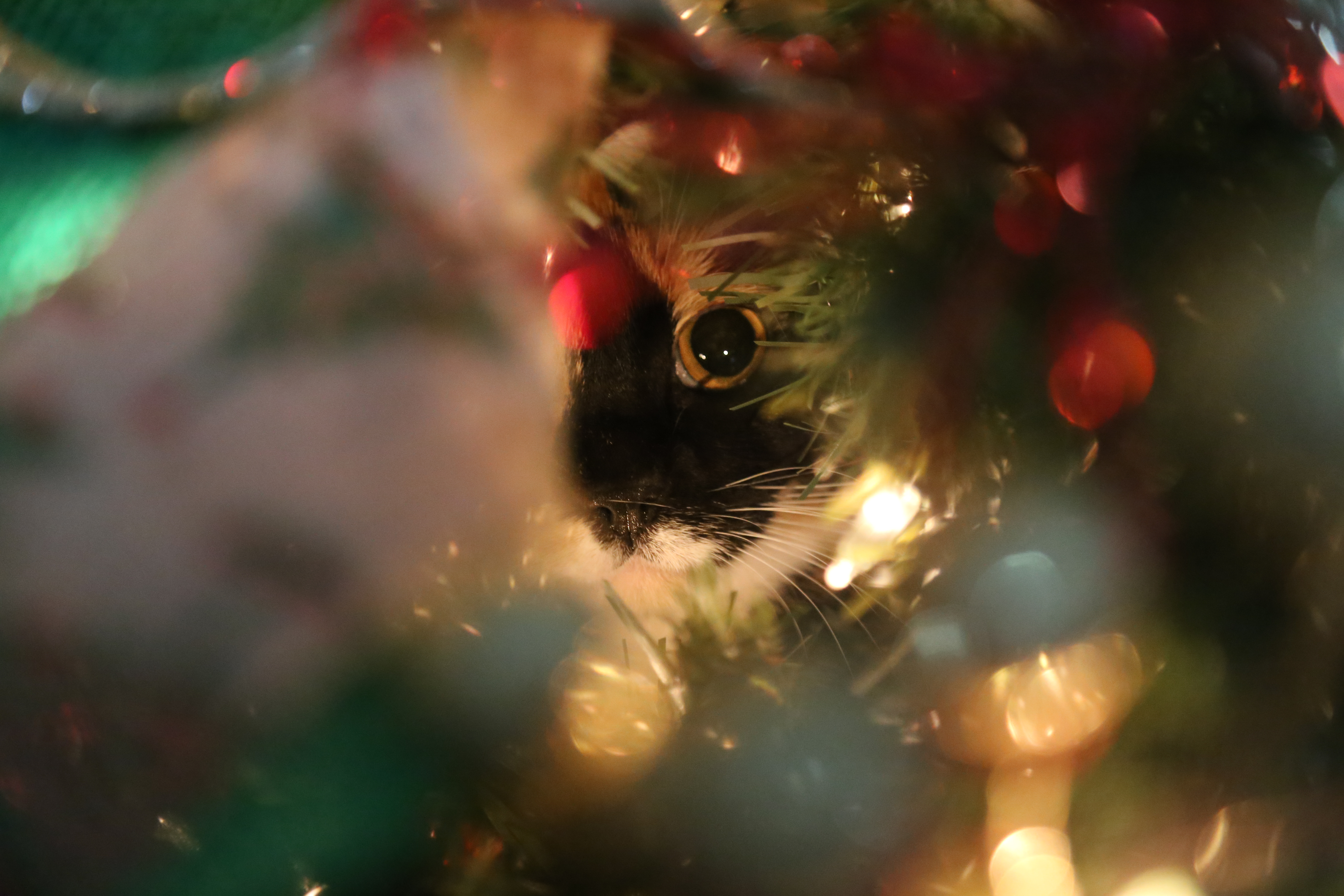 Make The Holidays Safer For Your Pets