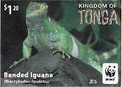 WWF Banded Iguana