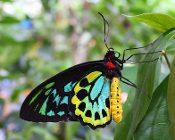 Cook Islands - Butterflies of the World