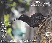 Penrhyn - Birds of the World - Paradise