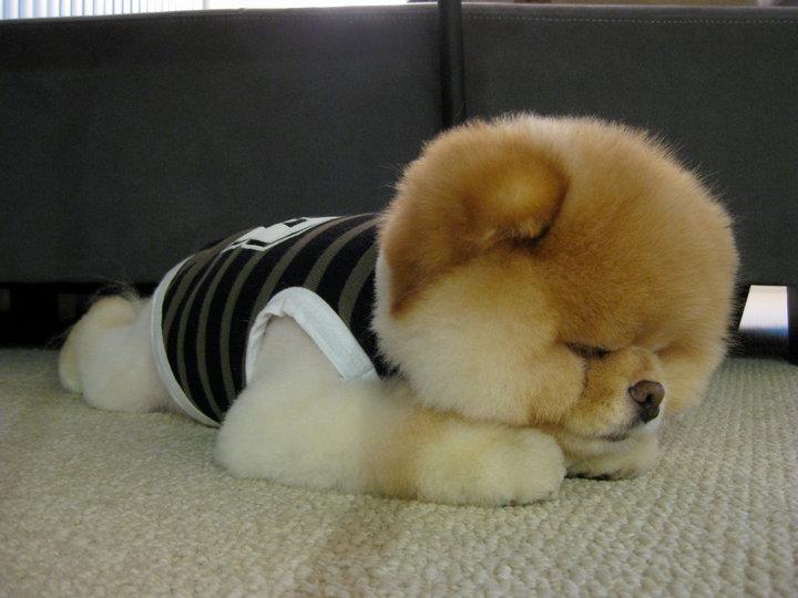 22 puppies are having the cutest sleepy saturday