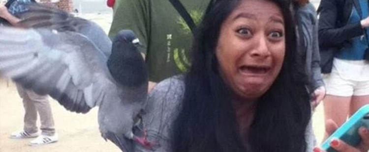 Pigeon violence is nothing to laugh about…wait, never mind