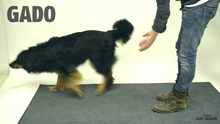 Dare you not to laugh as these dogs react to a magic trick!