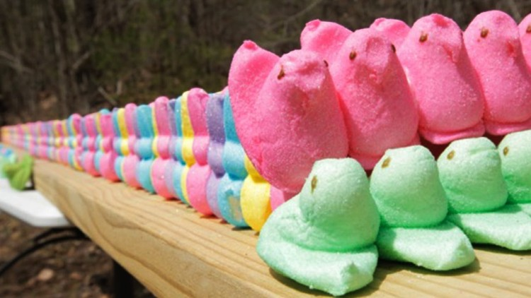 This guy must havefound out what Peeps are actually made of and decided to retaliate on the ingredients!