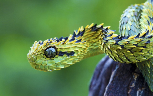 25 bizarre animals that I bet you never knew existed! I hope to never see #24 in person!