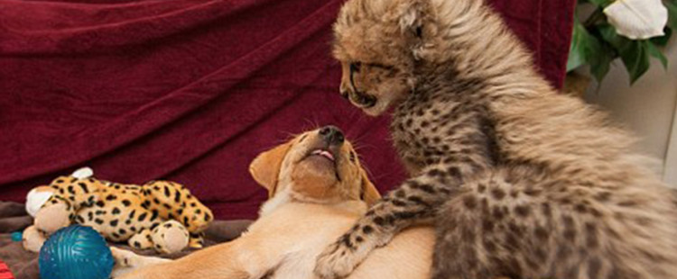 These awesome animals are the bestest best friends but you'll also be SHOCKED by their friendship.