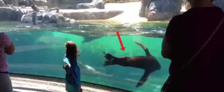 A sea lion at the zoo is genuinely concerned about a human girl and it's SO SWEET!