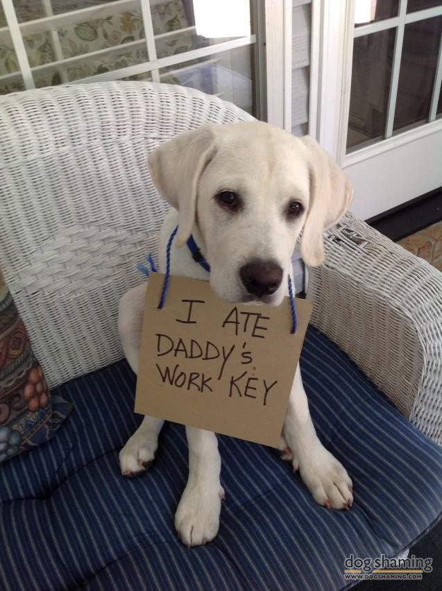 10 Dogs Full Of Shame…Or Are They? They Make Up For Their Bad Behavior With Cuteness.