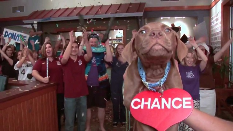 Take A Chance on these adorable animals that are up for adoption AND share this video to help them!