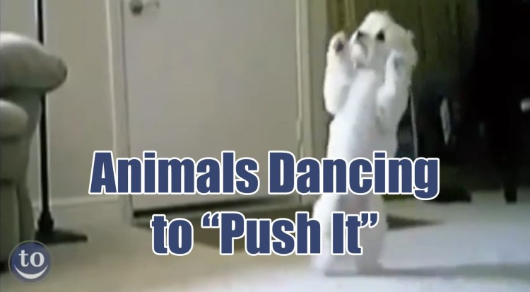 """The 80's Jam """"Push It"""" Was Made For These Animal's Awesome Moves!"""