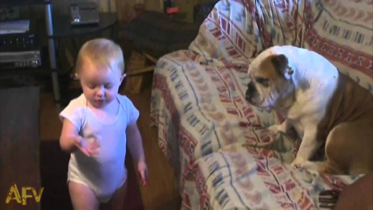 This Baby Does Not Hold Back In A Heated Argument With A Bulldog. The Bulldog couldn't care less…