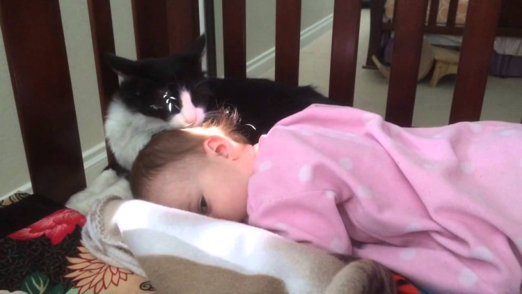 This kitty is grooming a human baby and it's too precious for words.