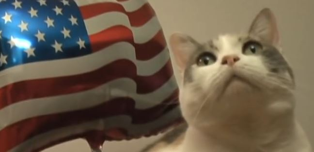 The 4th Of July Calls For Some Patriotic Cats