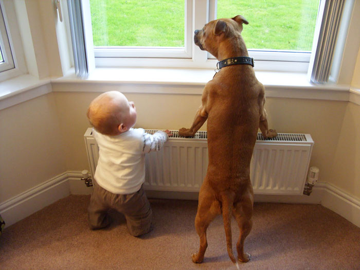 These Gigantic Dogs Are Paired With The Smallest Kids And It's Extremely Adorable!