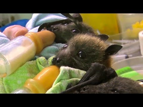 I Didn't Think Baby Bats Would Be Cute…I Was Wrong.