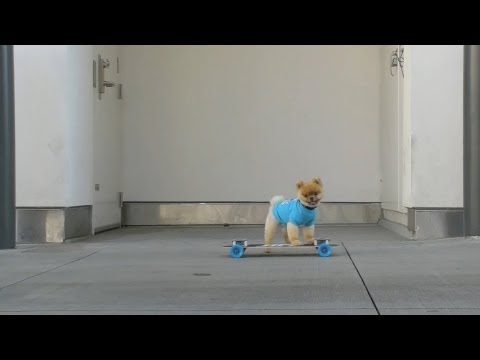 Little Pom With Mad Skills