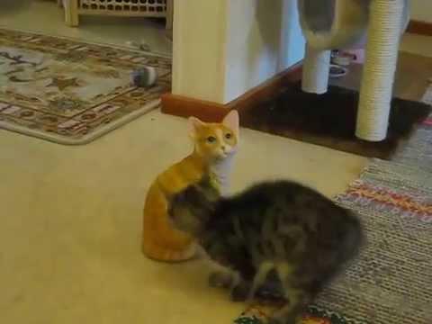 Real Cat Vs. Ceramic Cat…Ceramic Cat Wins!