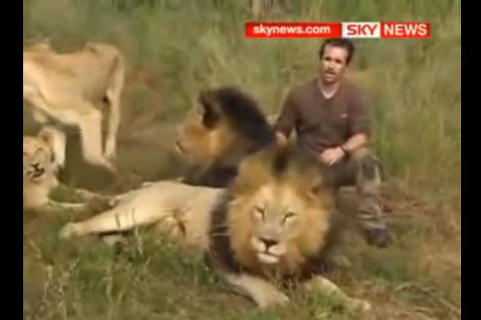 Man Is Accepted By A Lion Pride SO Awesome!!