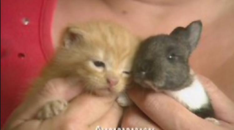 Momma Cat Adopts Baby Rabbit!