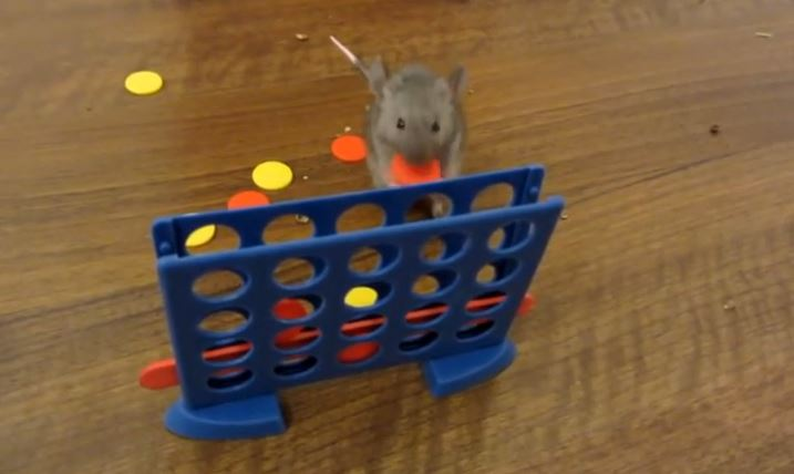 Wow! These Mice Are Crazy Smart!!