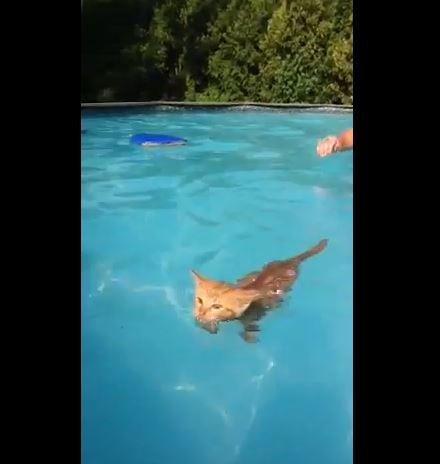 Looks Like A Cat, Swims Like A Fish