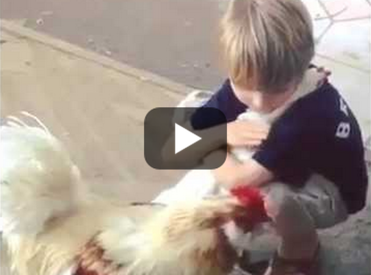 Who Would Have Guessed A Chicken Hug Would Be So Cute!