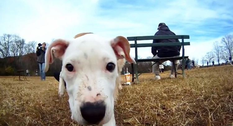 Doggie Vision: A Day At The Dog Park