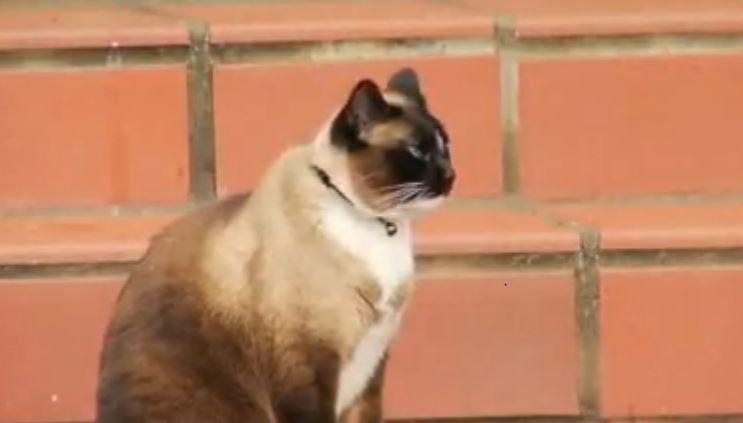 The Cat Burglar Attacks