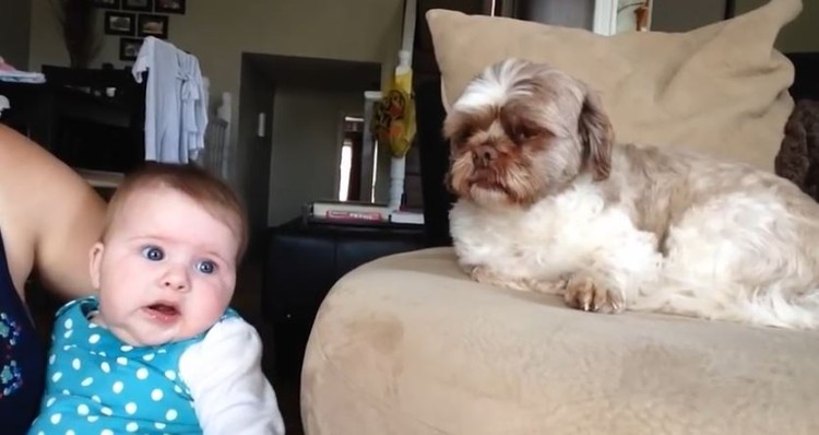 This Dog Has A Lot To Argue With Baby About