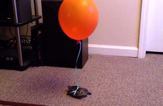 Do This And Never Lose Your Turtle Again!