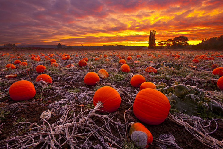 Fall in love with fall with these 10 STUNNING photos of a beautiful season!