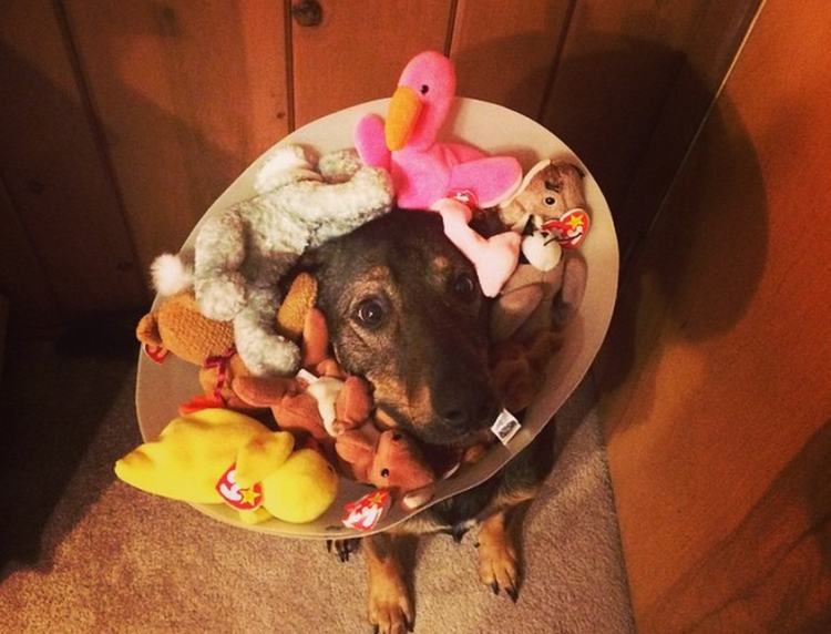 New Use For Your Awesome Childhood Beanie Baby Collection.