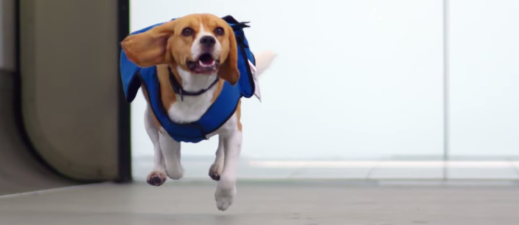An Amsterdam Airline Is Using A Friendly Pooch To Deliver Your Lost Items Back To You
