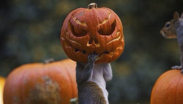 This Squirrel Is Bringing The Halloween Spirit To His Neighborhood (By Accidentally Getting His Head Stuck In A Pumpkin!)
