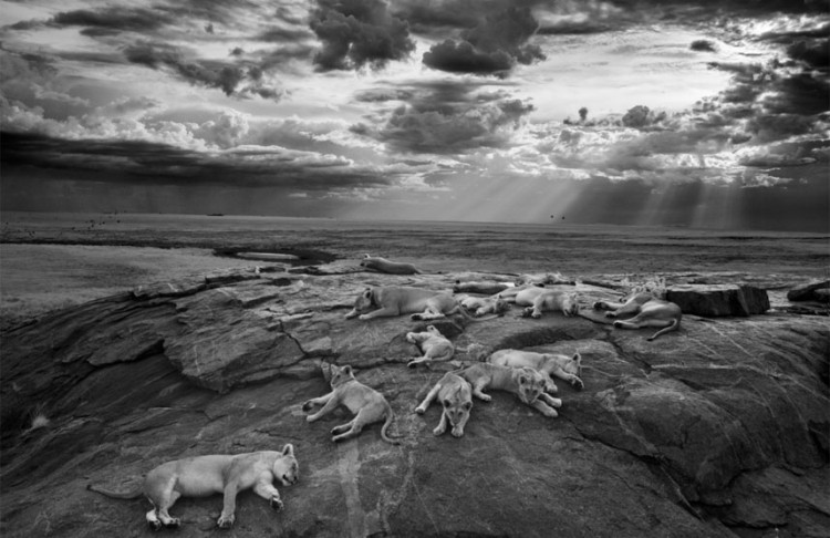 The Wildlife Photographers Of The Year 2014 Are Absolutely Amazing! Check Out The Top 5 Photos Here!