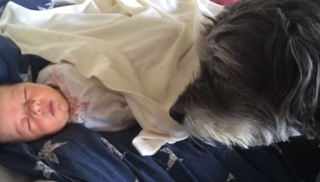 Cuteness Alert: Adorable Puppy Tucks In Her Baby Human