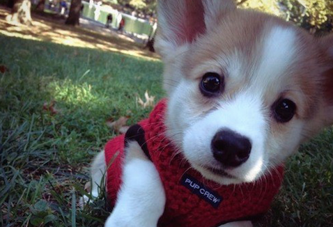 20 Of The Cutest Baby Animals That We Have Seen All Year