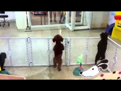 Watch This Adorable Puppy's Reaction To Seeing Its Owner