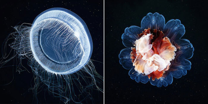 These Incredible Underwater Photos Show The Stunning Beauty Of Deep Sea Life