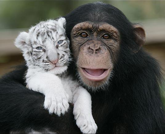 Here Are Some Of Our Favorite Hugging Images, In Honor Of Yesterday's National Hug Day