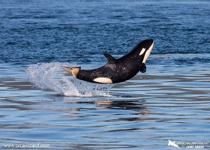 This Adorable Baby Whale Is Totally Our Friday Spirit Animal!