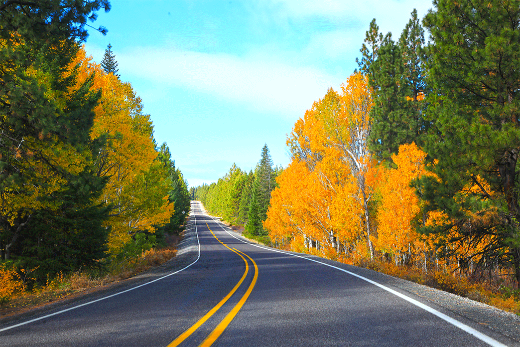 Drive along Westside Road in the fall enroute from Klamath Falls to Crater Lake. The route boasts bright oranges and greens as the fall foliage is changing colors.
