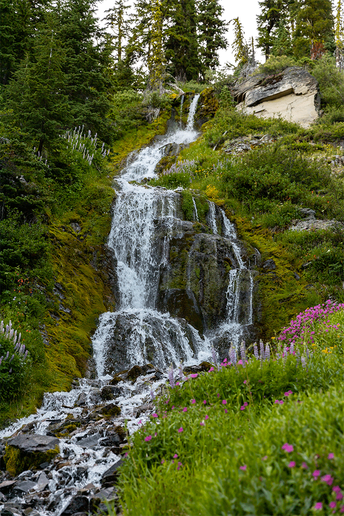 Vidae Falls in Crater Lake National Park cascading over a rocky slope onto shale rocks surrounded by lush greens and purple wildflowers.  Seeing this beautiful waterfalls in crater lake is easy as the route from Klamath Falls to Crater Lake is about an hours drive.